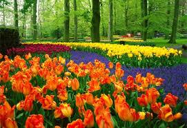 httpfikusa.blogspot.com201305taman-bunga-terindah-di-dunia.html